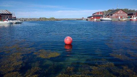 REVET SEG: Denne blåsa kom fra Bodø til Laukvik på egenhånd. Eieren er Kjell Henning Ingebrigtsen, leder i Norges Fiskarlag.