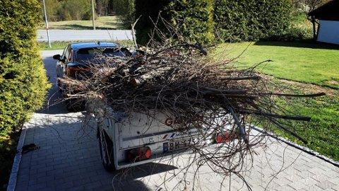 Nå skal veldig mange av oss gjøre dette, nemlig frakte hageavfall til gjenvinningsstasjonen. Da er det viktig å huske at også dette må sikres forsvarlig. Foto: NAF.