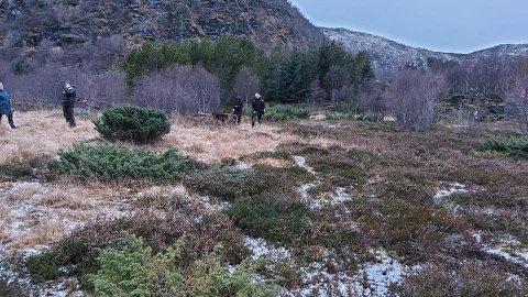 INGEN HUNDEPARK: Det ble ingen hundepark på Helle. Nå er Vestvågøy Hundesportpark på jakt etter et annet området hvor parken kan etableres.