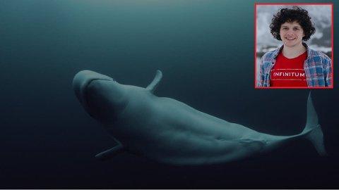 KVALEN HVALDIMIR: Filmskaper Inge Wegge har kommet tett på kvalen i forbindelse med arbeidet om å lage en dokumentar om hvitkvalen Hvaldimir.