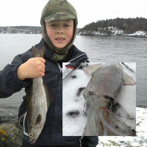 Sander Grimsrud Johansen (8) fikk blant annet sei da han og pappa Ronny var på fisketur før jul. Men det aller mest spennende han fikk på kroken, var en tiarmet blekksprut (innfelt).
