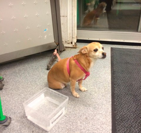 Noen glemte igjen denne hunden utenfor Kiwi i Gudesgate i Moss sentrum mandag kveld.