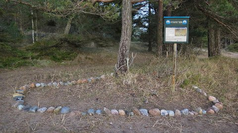 FREDET: På Husebystranda vokser den sjeldne Strandtornen. Rundt planten er det satt en steinring for å markere stedet.