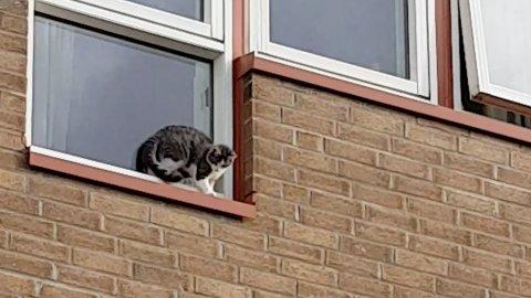 SKEPTISK: Katten virket ikke veldig komfortabel utenfor vinduet.