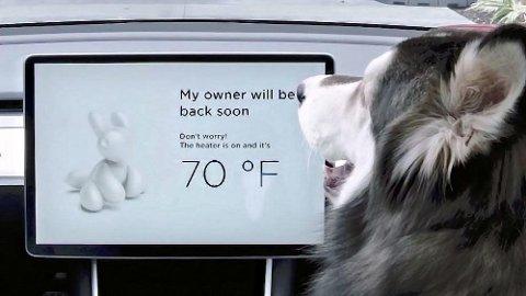 """For ikke lenge siden lanserte Tesla """"Dog Mode"""" i sine biler. I disse dager kommer det virkelig til nytte."""