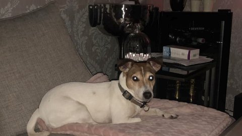 GIKK BRA: Sarpsborg-hunden Evita ble sendt til Fredrikstad Dyrehospital fredag forrige uke med blodig diarè. Heldigvis gikk det bra for denne hunden, og hun er nå hjemme igjen.