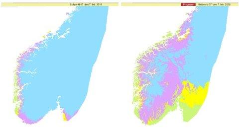SKIFØRE I FJOR OG NÅ: Dette kartet fra nettstedet senorge.no viser skiføre i Sør-Norge 7. februar 2019 (til venstre) og 7. februar 2020 (til høyre). Kartene viser antatt skiføre basert på snøtilstand og snødybde beregnet med en snøkartmodell og værforhold siste døgn. Den blå fargen viser hvor det er skiføre og tørr snø, rosa hvor det er skiføre og fuktig snø og gul farge hvor det er lite snø. Grønn farge er barmark Foto: (Senorge.no/Nettavisen)