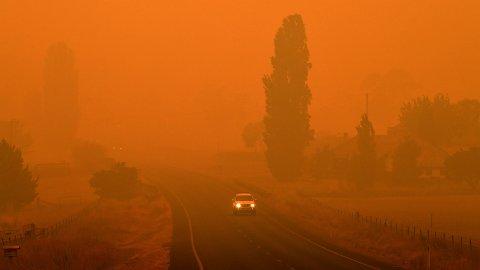 Dystert budskap: Menneskelige inngrep fører til at en rekke dyre- og plantearter er i ferd med å bli utryddet. Én årsak er global oppvarming, som forskere mener også fører til et økende antall skogbranner. I Australia oppleves det stadig branner på grunn av varmt og tørt vær. Som her i New South Wales, i januar, 2020.