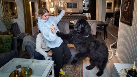 BLIR BOK-KJENDIS: Sjarmøren og Newfoundlanderen Anton er ikke tungbedt når matmor Monica Sagen kan lokke med en liten godbit. Med 80 kilo hund som hopper opp hender det at det blir litt action i stua.   FOTO: JOHAN ARNT NESGÅRD