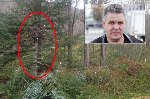 UKJENT: Bjørn Borch (innfelt) har ennå ikke fått et svar på hvem som har hugget i trærne i eiendommen hans. Foto: Privat/ Masoud Haidari