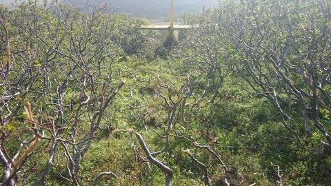 STOPPET HER: Etter at piloten mistet kontrollen på flyet, stoppet ferden utenfor den private flystripen her.