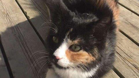 May-Tove Sivertsen mistet katten Ida, som ble tatt av ørn. Nå advarer hun andre. Foto: Privat