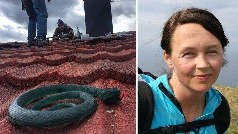 Med dette trikset får de arbeidsro på taket. Foto: Prviat