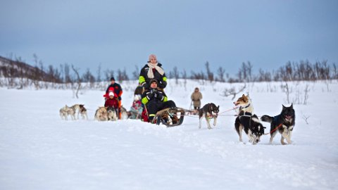 Hundekjøring på Breivikeidet har blitt en stor turistattraksjon.