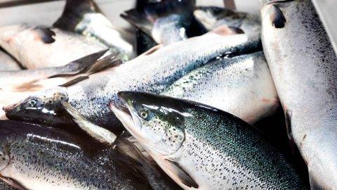 PENGER Å TJENE: Som E24 har dokumentert, har gratis undervisningskonsesjoner fra staten er blitt en gullgruve for norske havbruksskoler - og oppdretterne som får leie dem.