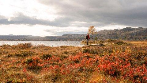HØSTIDYLL: Høst ved Furusjøen i Kvamsfjellet i Gudbrandsdalen.