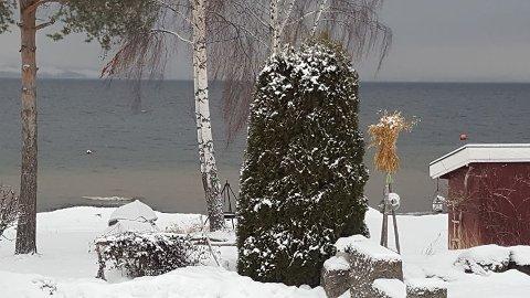 MISFARGET: Langs vannkanten er Mjøsa misfarget ved renseanlegget på Skreia.