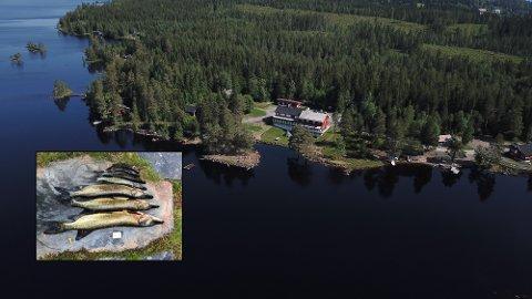 PROBLEM: Gjedde skaper problemer for Skumsjøen, et vann som egentlig skulle vært gjeddefritt.