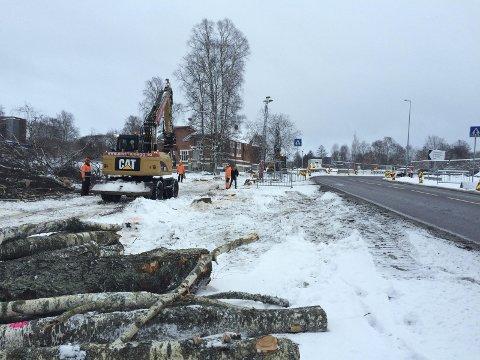 Hugd NED: Mange har reagert at de flotte trærne er tatt ned sydvest for Mejerikrysset. Det skal anlegges en ny busslomme her.