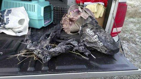 DUMPET I EN SØPPELSEKK: Kattungen ble første gang sett da den oppholdt seg rundt søppelsekken som lå i veikanten. De som lette, forteller at det er tydelig merker etter katt(er) som har klort og klort.