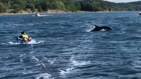 SPENNENDE: Markus Langhammer Keenan (12 år) fikk nærkontakt med en eksotisk type i Bunnefjorden denne helgen.