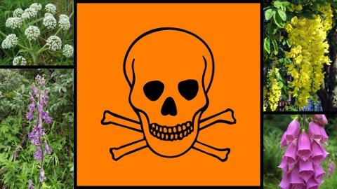 OBS! Førsteshjelp ved forgifting avhenger av hvilken gift det dreier seg om. Dersom uhellet skulle være ute, ta kontakt med Giftinformasjonen på telefon 22 59 13 00 og sjekk Helsedirektoratets liste over giftige planter.