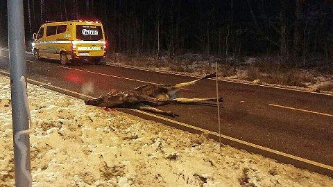 VÆR OBS: Snøen gjør at hjorteviltet trekker ned til bygda for å finne mat. Landbrukskontoret ber bilister i Lågendalen være ekstra forsiktig. Bildet er fra en tidligere hendelse.
