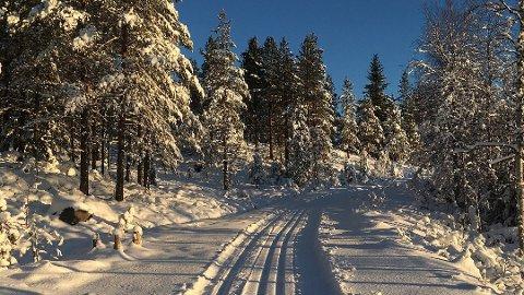 De fleste hedmarkinger må nok se langt etter sola i løpet av uka, men skiføret holder seg i hvert fall - og noen ny kuldeperiode blir det ikke.
