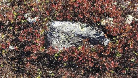 """Høstfarger: """" Når fjellbjørka gulner og lyngmarka blør ..."""" skriver Guttorm P. Haugen i ei vise. Akkurat slik er det i fjellet nå. Foto: Sverre Evensen"""