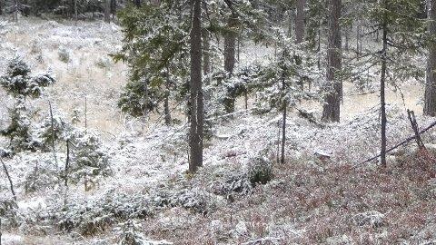 Høst: Det første snøfallet kom i oktober.  Ellers utmerket måneden seg med svært lite nedbør.