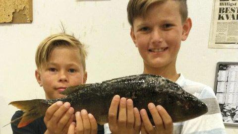 Stolte: Mikael og Gabriel Nomerstad fra Brumunddal med en flott abbor som leder årets RM.