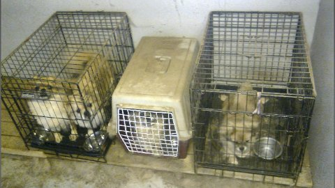 I bur: Hundene har stått i transportbur