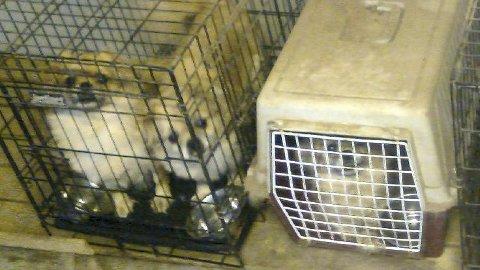 Mange av hundene ble holdt i små bur opp til 18 timer i døgnet. Kvinnen har nå bare lov til å ha maks 20 hunder etter pålegg fra Mattilsynet. Arkiv.