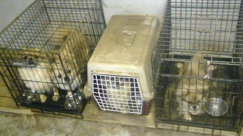 Politi: Eieren av hundene blir nå politianmeldt av NOAH. Organisasjonen vurderer også en anmeldelse av Mattilsynet. Foto: MATTILSYNET