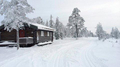 STRENGERE REGLER: Pensjonist Hans Toftelien ser seg lei av løshunder i skisporet, og ønsker at kommunen innfører strengere båndtvangregler.