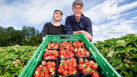 Årets jordbær fra Furnes. Alicja Gojaszek  og Ola Qvale har hendene fulle om dagen