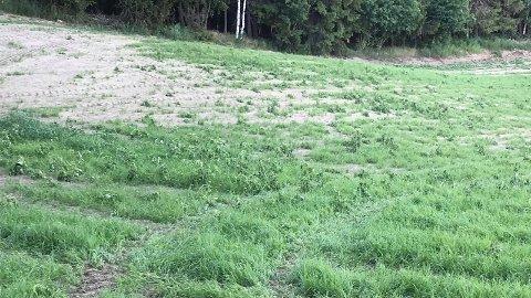Tørken som rammer landbruket gir ekstremt dårlig vekst og avlinger, slik dette bildet viser. Det påvirker gardbrukere som er avhengig av vinterfor til besetnigene sine. Nå kalles det inn til krisemøte for diskusjoner om hvordan situasjonen kan møtes.  Foto: Jan Rune Bakkelund