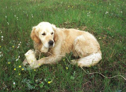 Politiet har fått inn over 200 meldinger om savnede og hittede hunder i våre kommuner så langt i år.