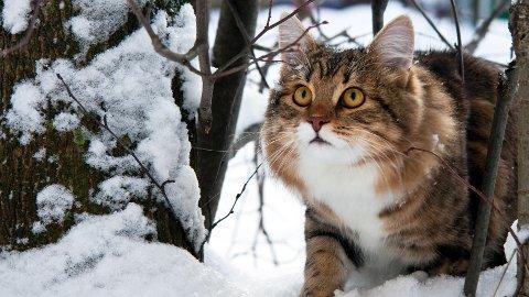 Pass på at katten ikke lider når det blir veldig kaldt i været.