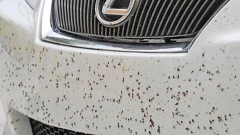 På sommeren kan det noen ganger føles som å møte en vegg med insekter, de setter seg også godt fast i lakken. Men dette bør du få bort så fort som mulig.