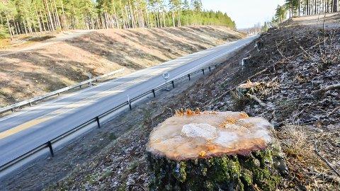 BARE STUBBENE IGJEN: Skjæringene ved Furumo har blitt rensket for trær. Det gir mer sikt og lys for trafikanter på riksveien gjennom Modum.