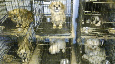 Begrensninger: Hundeeier får ikke lov til å ha flere enn 20 hunder, og eier får heller ikke lov til å avle på hunder.Arkiv
