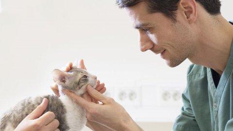 Norske katter har flere sykdommer enn tidligere, men mange kommer aldri til veterinær. Foto: AniCura/ANB
