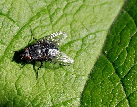 Insekter dør som fluer. Forskere vil finne ut hvorfor, så nå skal alle landets insekter telles. Foto: Sara Johannessen / NTB scanpix