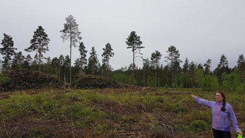 – HENSYNSLØST: Det sier Tove Kongsvik i Ullensaker MDG, etter at utbyggeren hogde ned skog i hekkesesongen.