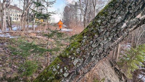 LEIRRAS: Området der leirraset har gått ligger nedenfor Vilberg ungdomsskole. ALLE FOTO: EIDSVOLL KOMMUNE
