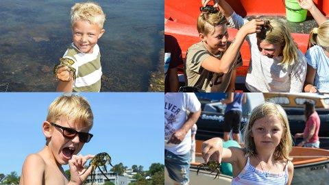 LANDKRABBER: På Granholmen camping var det mange ivrige deltakere som fanget krabber, fordi de ønsket å fange flere enn naboøya Vøra.