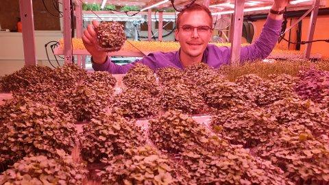 Daglig leder Christian Wisnes viser her fram kål fra produksjonen til Naturlig Grønn.