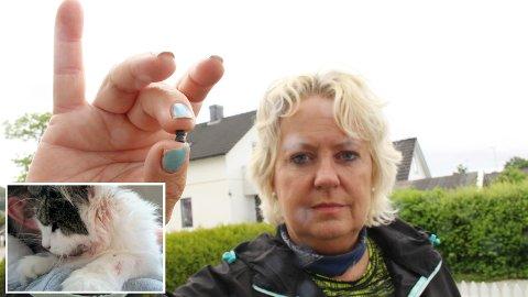 BLE SKUTT: Katten Sassy (6 år, innfelt) ble skutt med luftgevær på Austrått. Katten overlevde heldigvis. Eier Grete Anvedsen ber folk følge med, slik at det samme ikke skal skje andres katter.