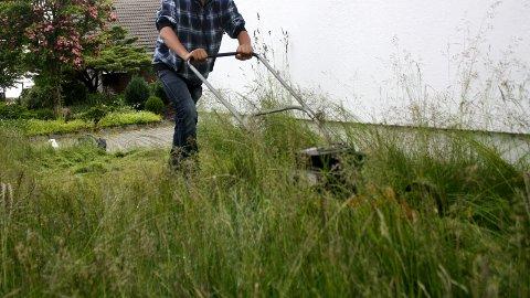 KLIPPET PLENEN?: Lurer du på hvor du skal gjøre av det nyklipte gresset fra hagen? Hageavfall og annet avfall kan du hver lørdag i juni og august levere gratis på Vatne.